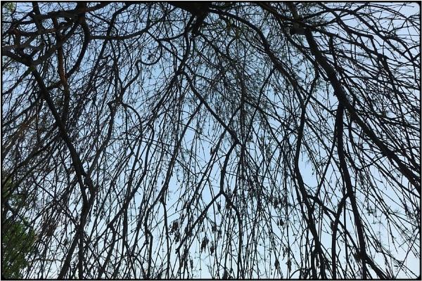 the canopy by FabioKeiner