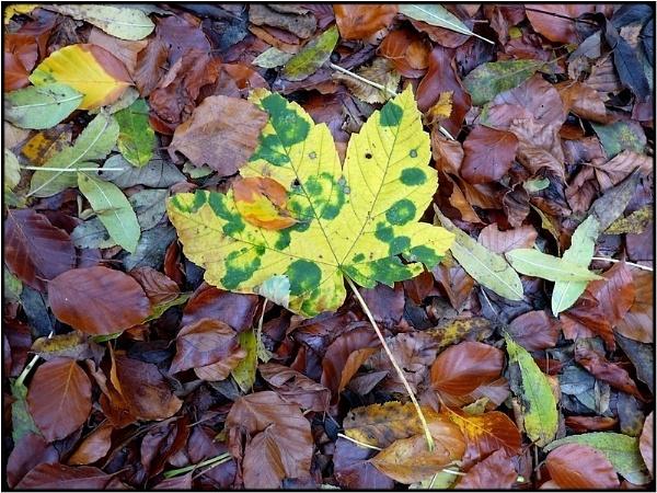 camouflage by FabioKeiner