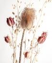 Dry Flowers _01