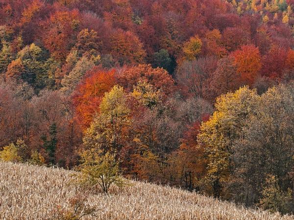 fall by LaoCe
