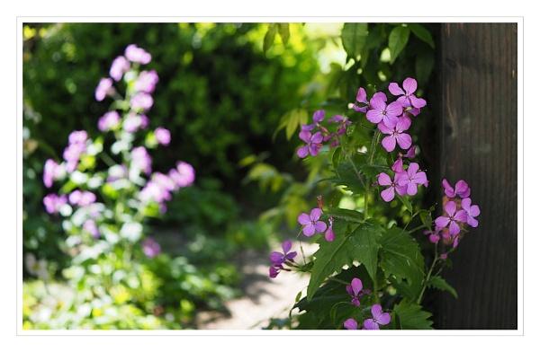 Garden by cattyal