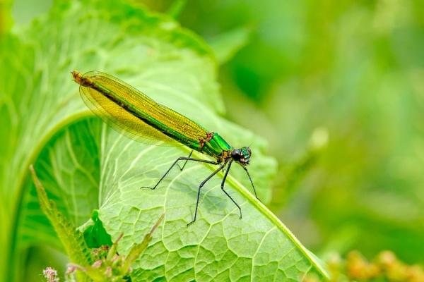 Damsel Fly? by Oldroadster
