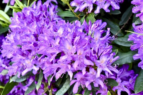pretty flowers by Mannyfreedman