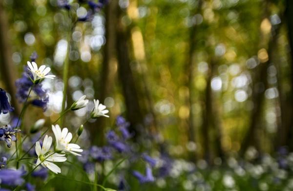Woodland flowers by dawnstorr
