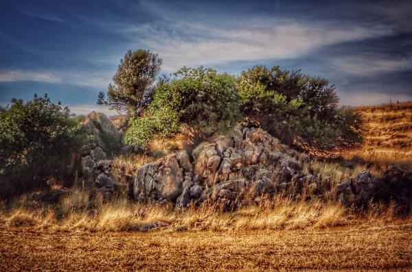 Rocks & Trees. by exposure