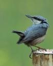 Where are those pesky woodpeckers? by Holmewood