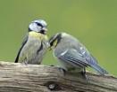 Feeding time! by Holmewood
