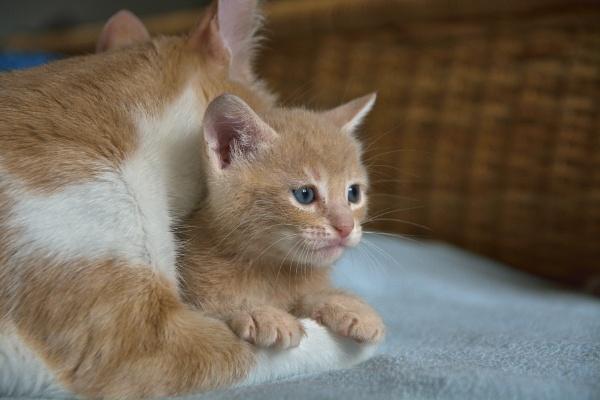 Kitten 2 by luminus