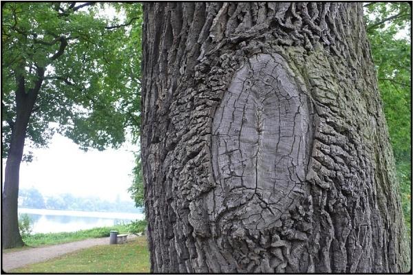 treesign by FabioKeiner