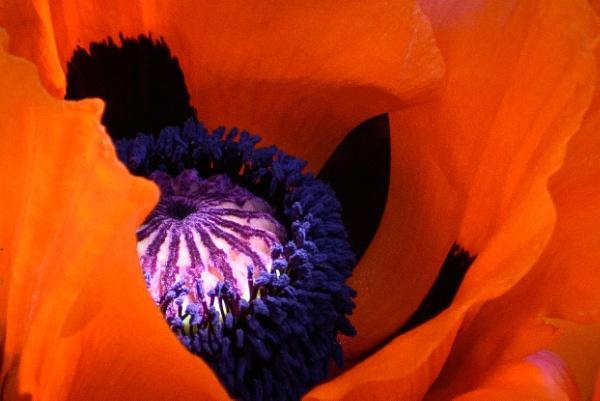 Study in orange by billmyl