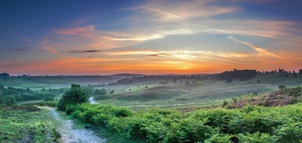 Bracken Morning by NickLucas
