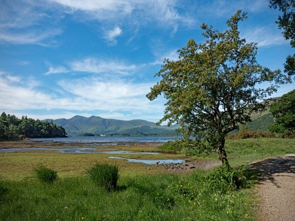 Derwent Water From Manesty Woods 435 by jim_horsfield