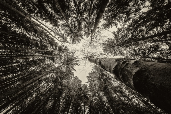 looking up by mogobiker