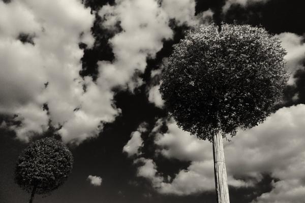 city trees by leo_nid