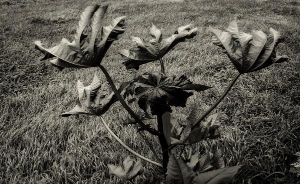 summer wind by leo_nid