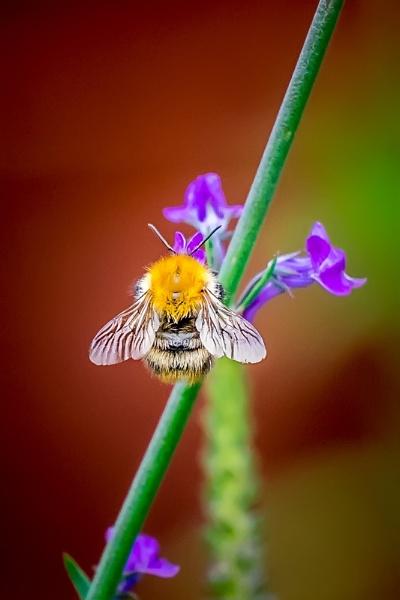 Bee 4 by photographerjoe