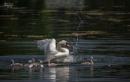 Swan Vista by ripleysalien