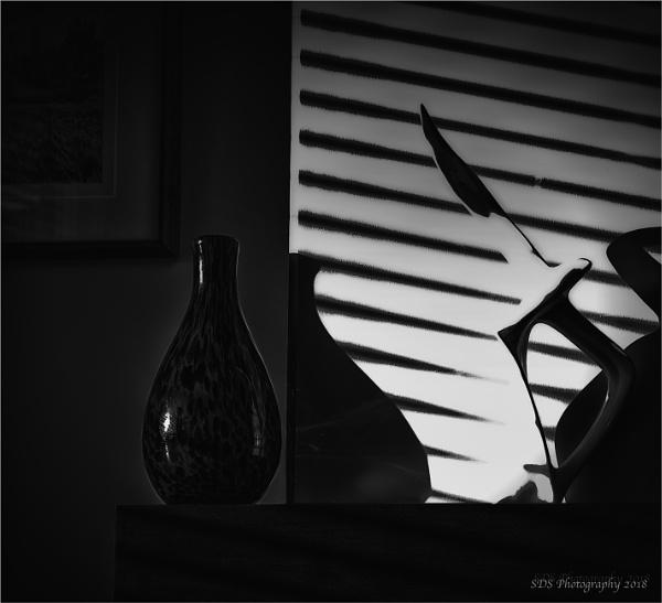 It\'s a Bird by Daisymaye