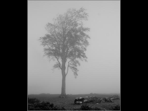 Tree in the Fog by Otinkyad