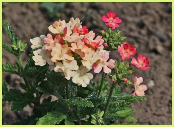 PRETTY FLOWERS by EMJAYCEE