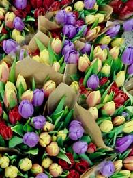 Spring Flowers Tulips