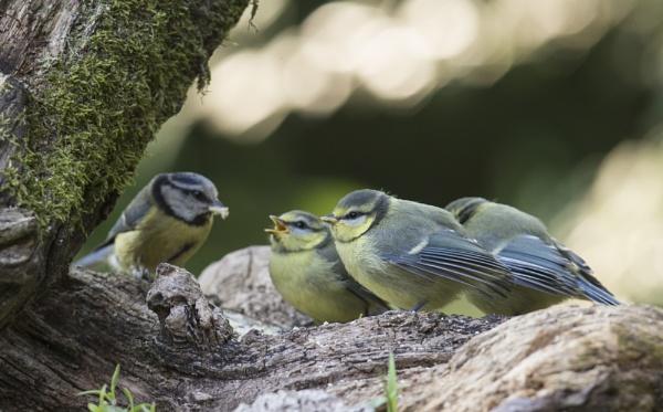 Bokeh Birds by philhomer