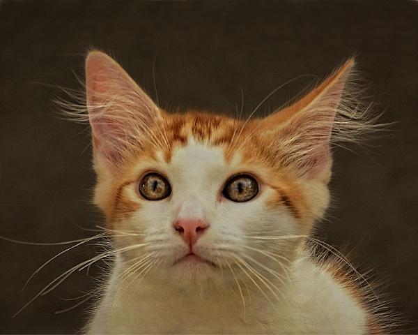 Kitty by sweetpea62