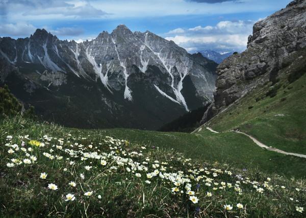 Alpine Meadows and mountains by HelenaJ