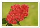 Red flower by deavilin