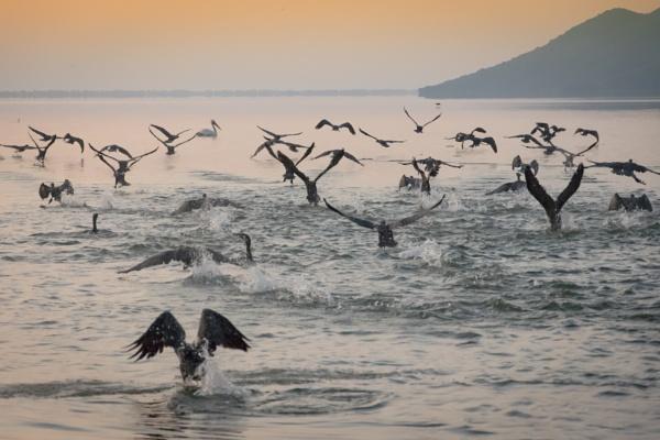 Fly Away by jimobee