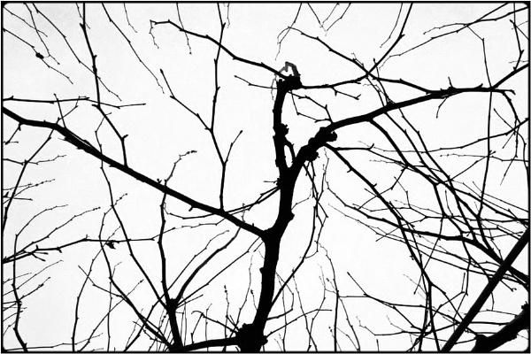 bare twigs by FabioKeiner