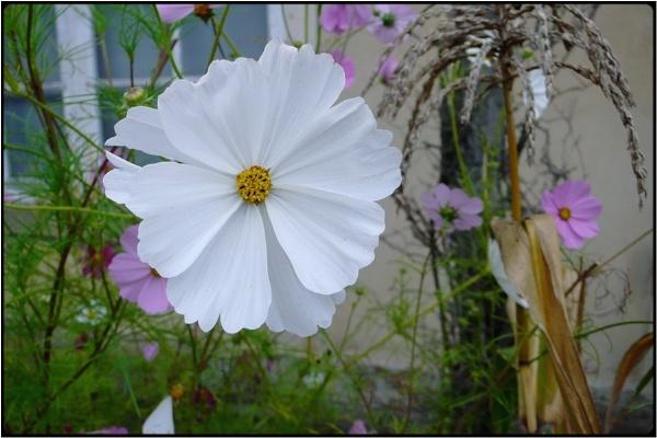 flower still by FabioKeiner