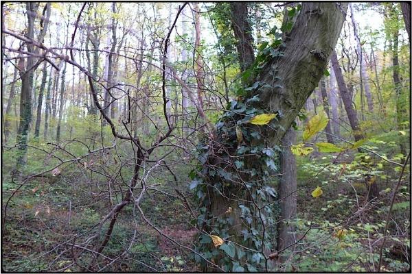 fallwood still by FabioKeiner