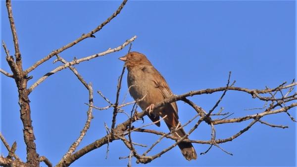 Brown Bird at Lake Cornneros by louneson