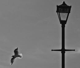 Flight 'n Light.