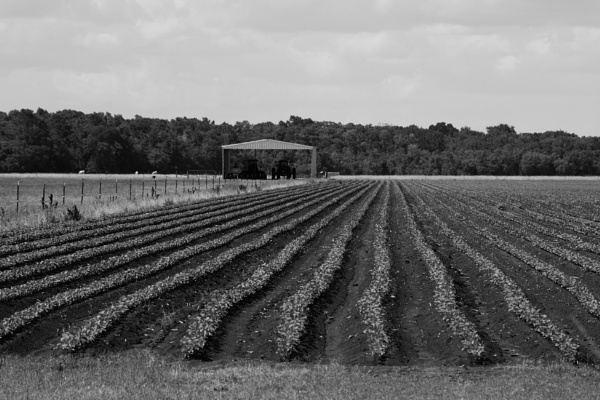 Furrows by PetesPix