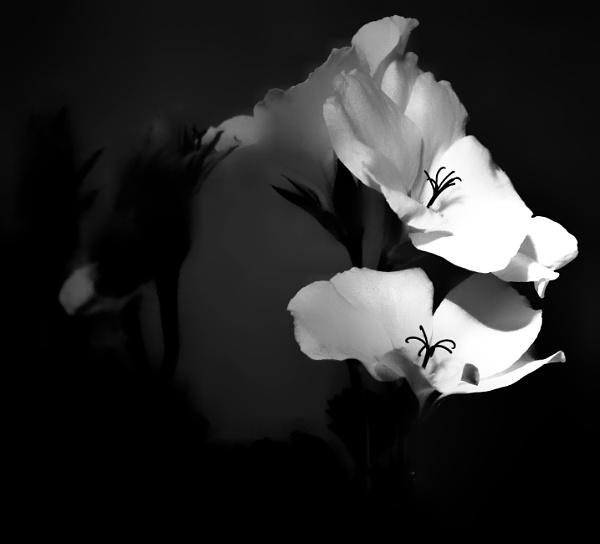 Flowers bw by KrazyKA