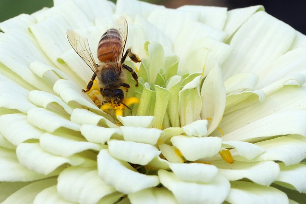 Flower and Bee by BHSDallas