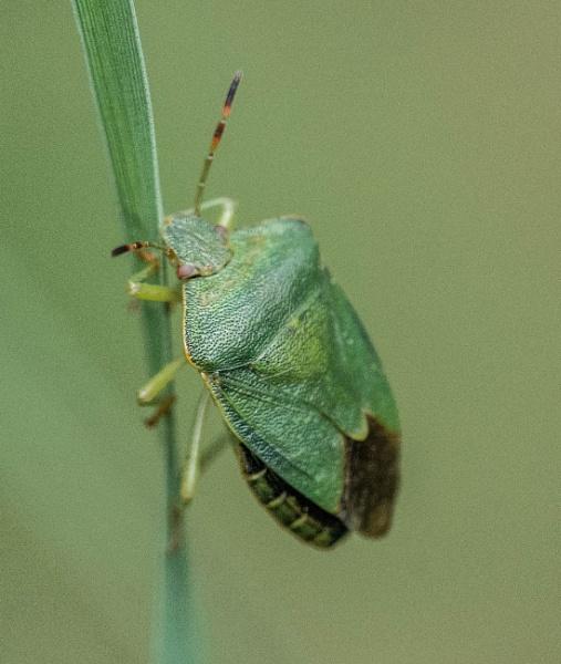 green field bug by madbob