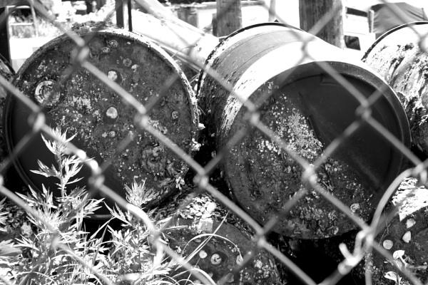 "~ \""Mollusked Barrels thru Fence\"" by LexEquine"