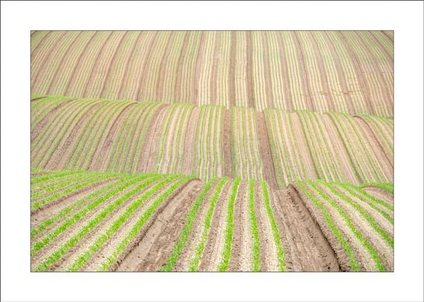 Crop Lines by Steve-T