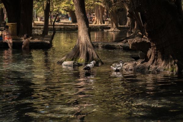 CUAMECUARO LAKE by nikonf5