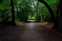Ashridge ancient Forest