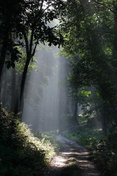 Morning light by clicknimagine
