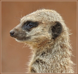 This is my best side............Simples !!