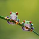 A Fine Pair by jasonrwl