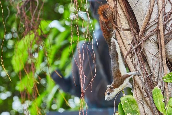 squirrel by MVL