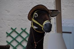 A Greek donkey !!