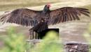 Turkey  Wings by tonyguitar