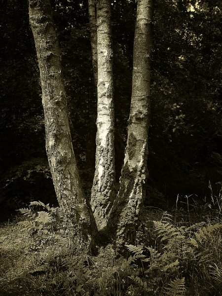 Three Trees by kaybee